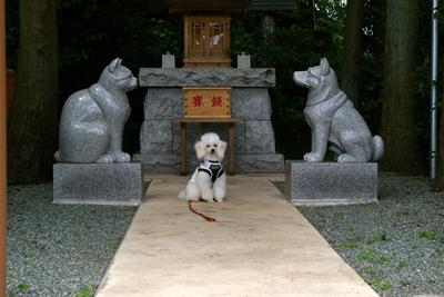 犬の初詣7