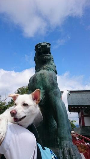 犬の初詣4